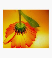Orange Delight Photographic Print