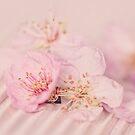 Romantic Soft Pink Peach Blossom by artsandsoul