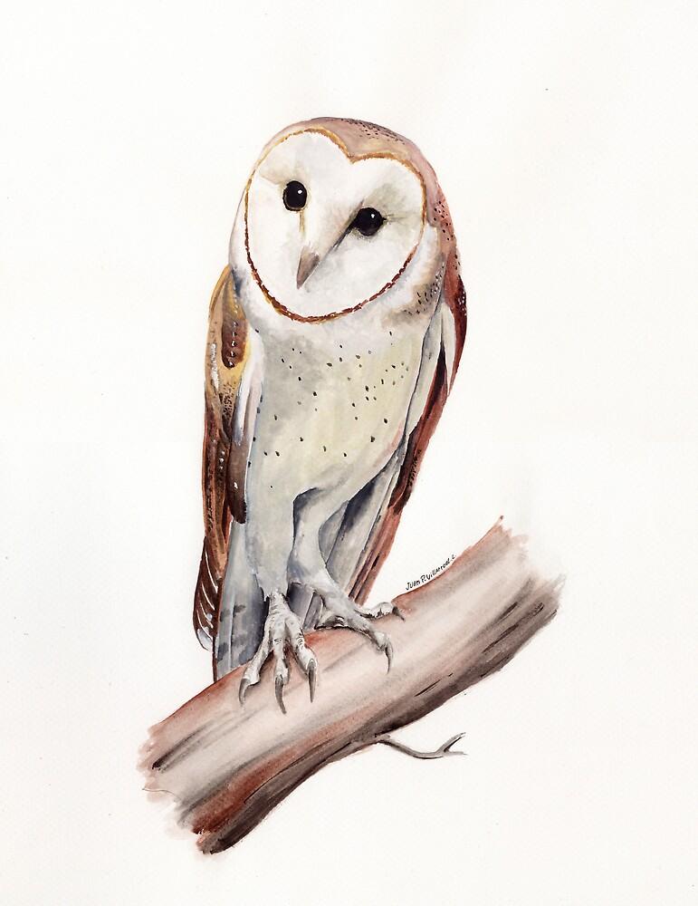 Barn Owl by zedek