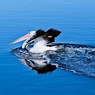 Pelican power 0012 by kevin chippindall