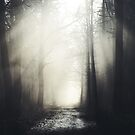 Misty Path by HelmarDesigns