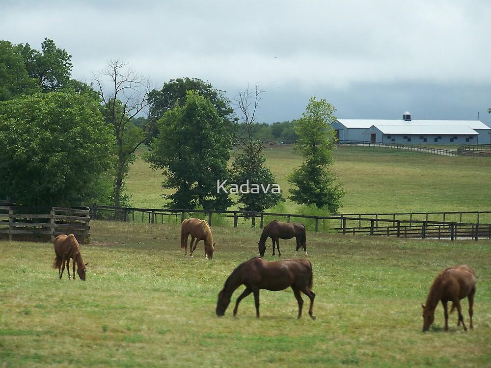 Horses  by Kadava