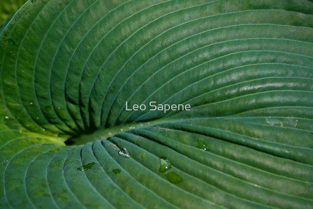 Hosta texture by Leo Sapene