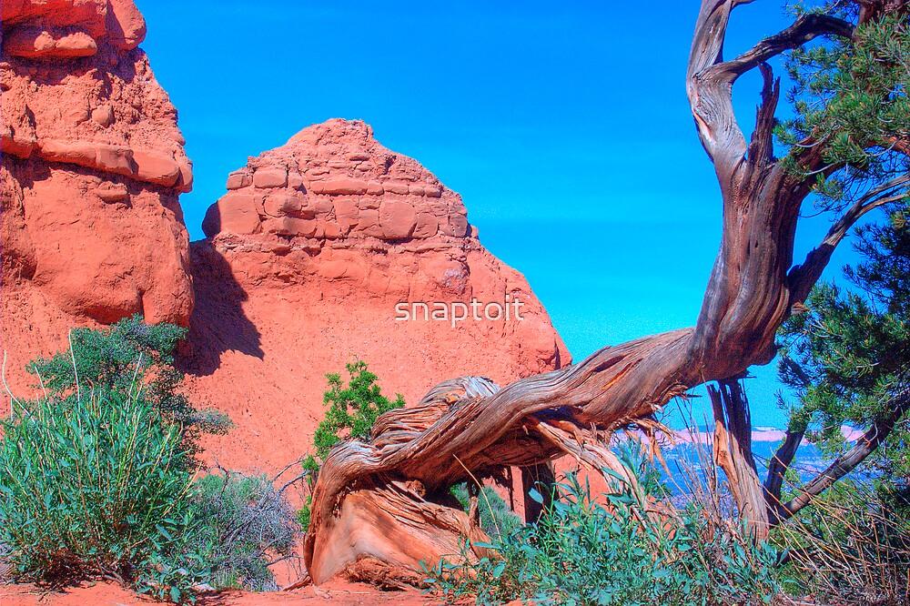 A Sideways Tree by snaptoit