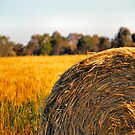 Hay by Bami