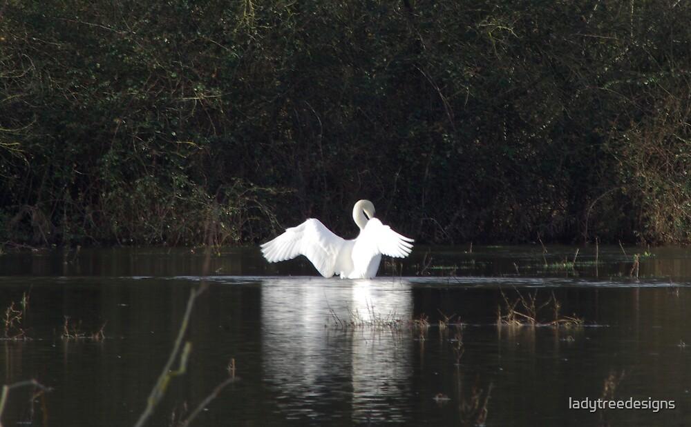 swan lake by ladytreedesigns