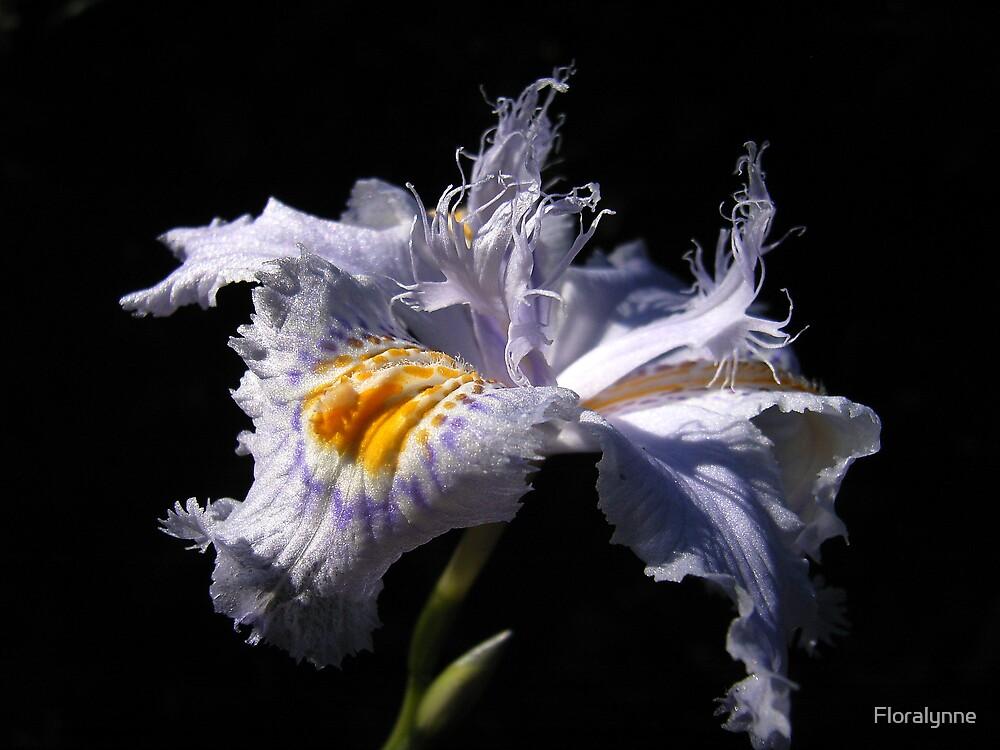 iris by Floralynne