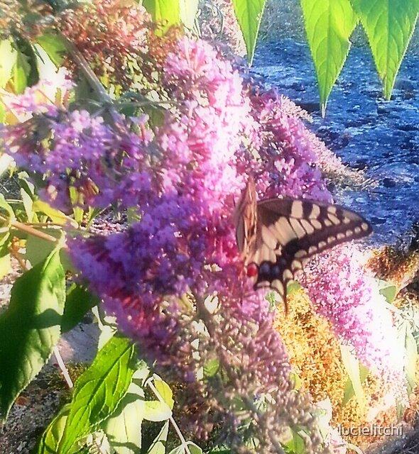 Papillon sur un lilas by lucielitchi