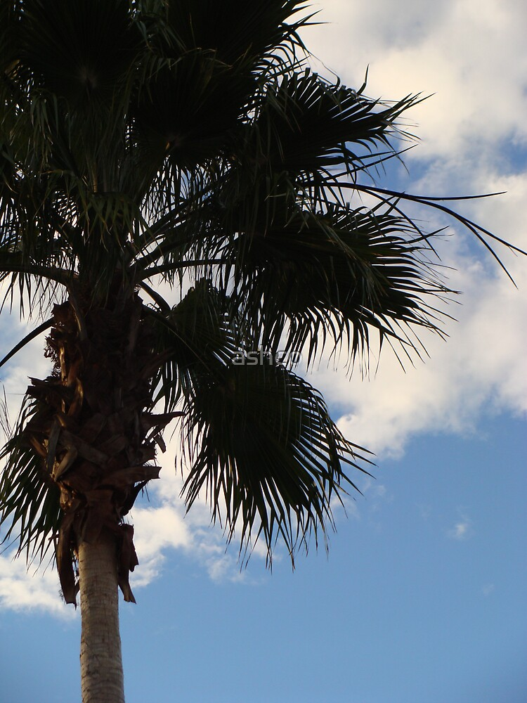 palm trees2 by ashco