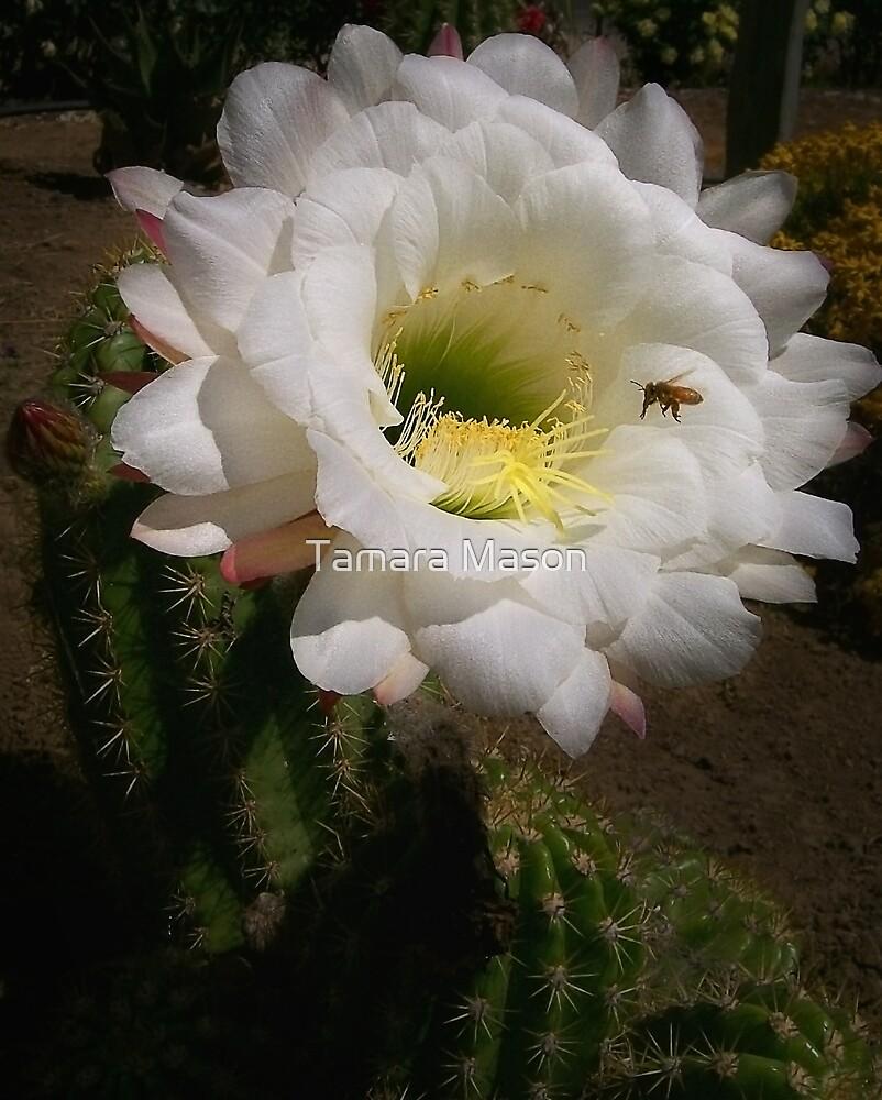 Cactus Flower by Tamara Mason