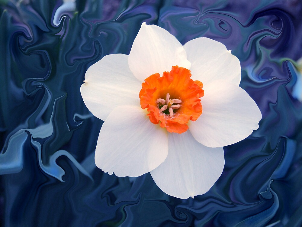Daffodil in Blue by Jim  Darnall