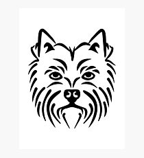 Westie West highland Terrier Photographic Print