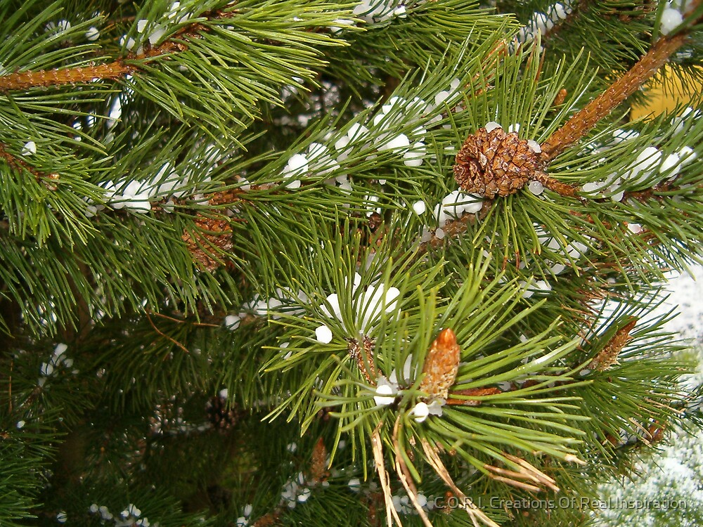 ice pine by C.O.R.I. Creations.Of.Real.Inspiration