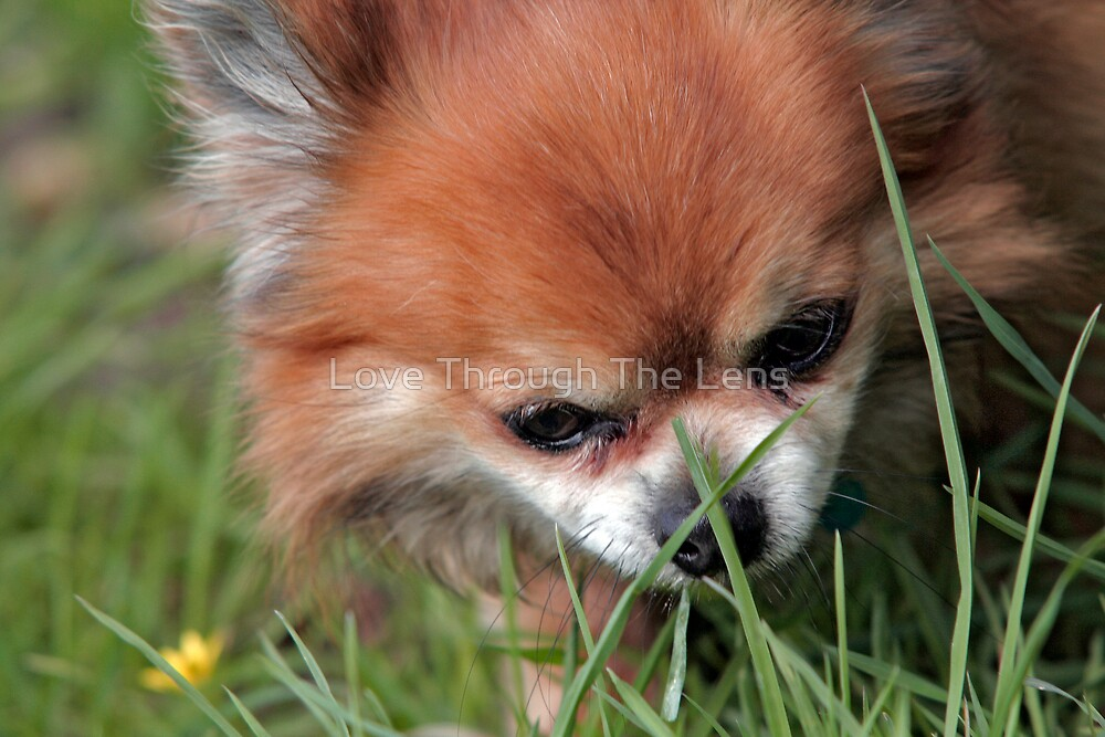 Grass Is Good by Love Through The Lens