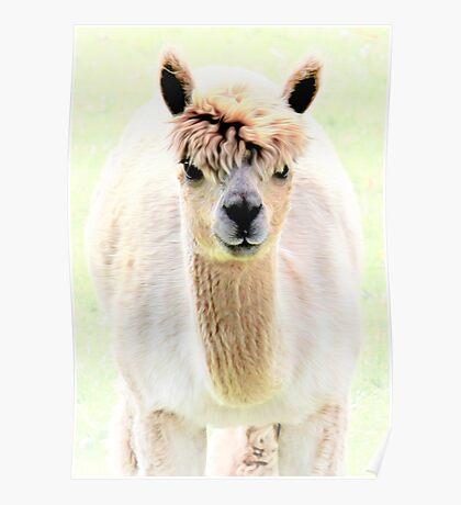 Sweet alpaca Poster