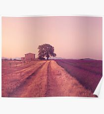 Provence Morning Light  Poster