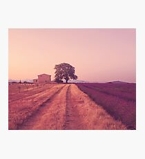 Provence Morning Light  Photographic Print