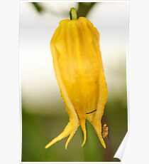 Yellow Flower and Insect Poster