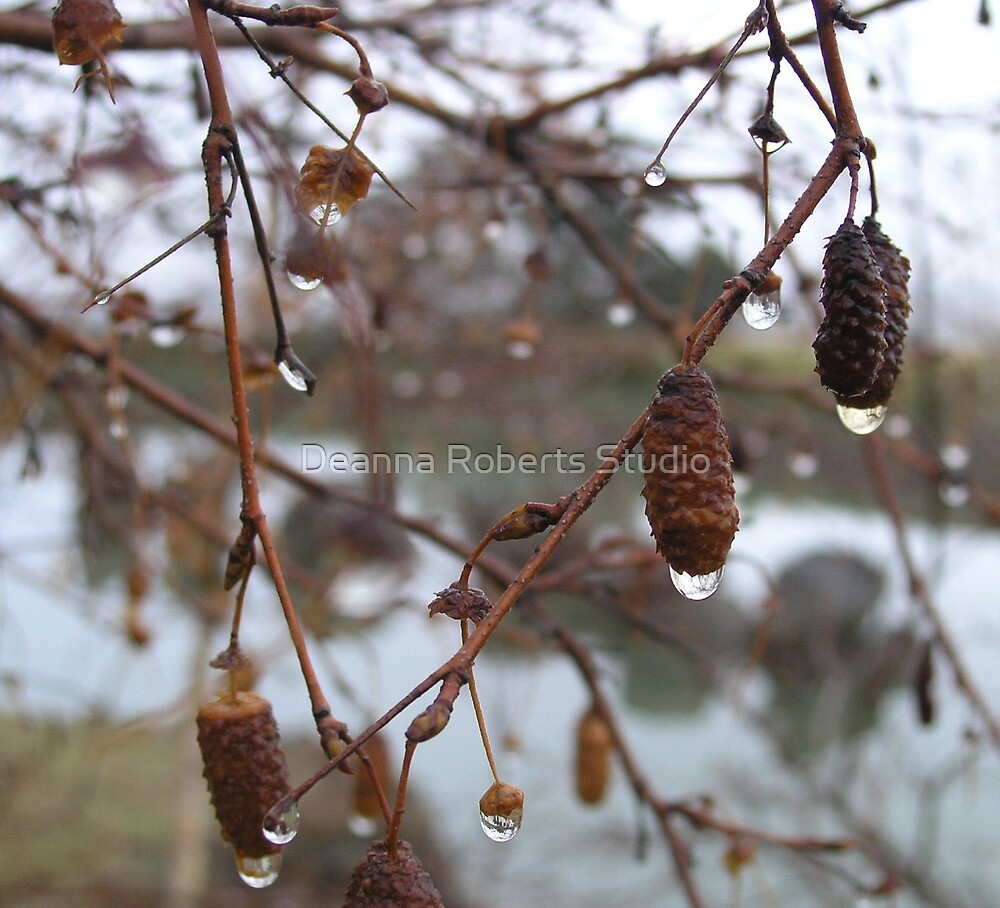 Dew Drops by Deanna Roberts Think in Pictures