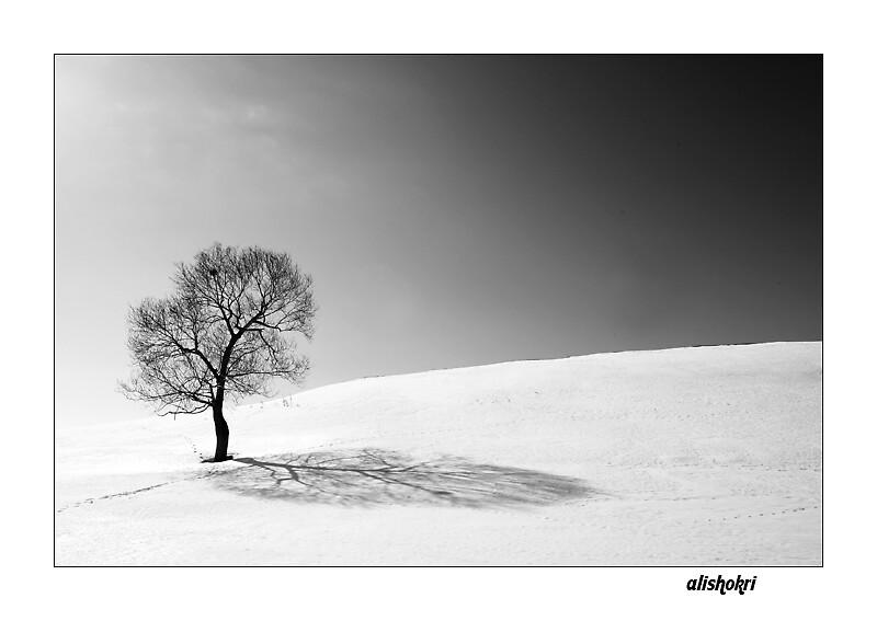 none  by alishokri