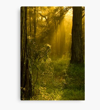Catching the light Canvas Print
