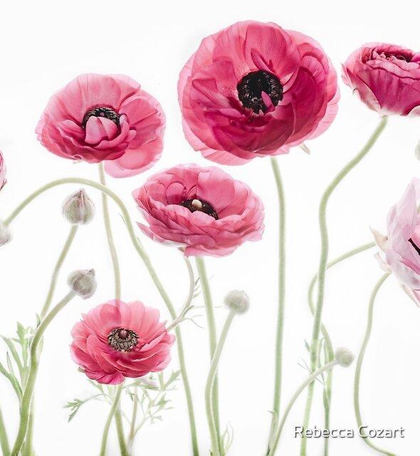 Pink Beauties by Rebecca Cozart