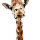 single giraffe by Prince-Dannie