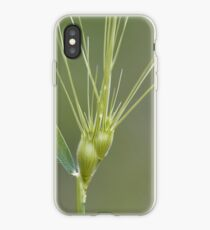 Ovate goatgrass (Aegilops geniculata) iPhone Case