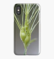 Ovate goatgrass (Aegilops geniculata) iPhone Case/Skin
