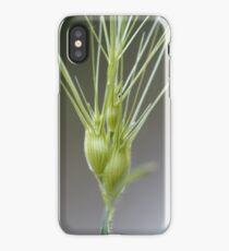 Ovate goatgrass (Aegilops geniculata) iPhone Case