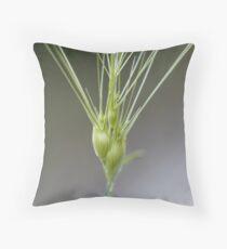 Ovate goatgrass (Aegilops geniculata) Throw Pillow