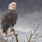 bald eagle-- snow flurry by R Christopher  Vest
