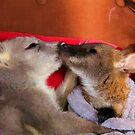 First Love - Wallaby Babies by NaturePrints