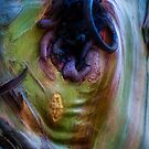The Tree Bark Collection # 16  - The Magic Tree by Philip Johnson