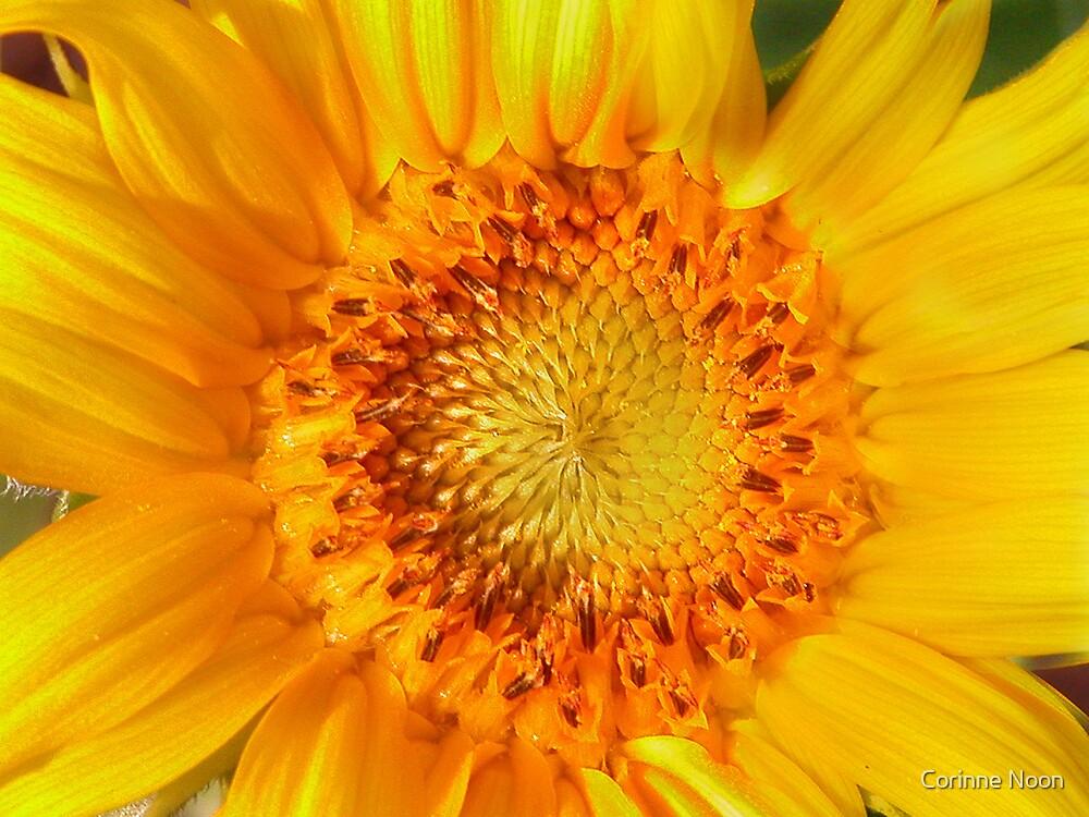 Mini Sunflower by Corinne Noon