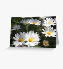 Margaret flowers, flowers, summer flowers, awesome flowers,  Greeting Card