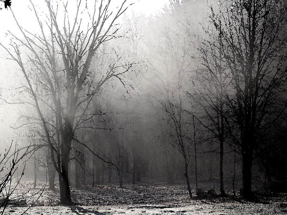 Morning Mist by peggywright