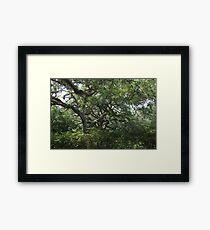 Wild Oaks Framed Print