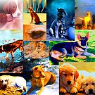 Artwork of Dogs by Nancy Stafford