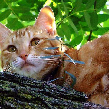 Jennifers Cat by HippyDi