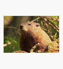 Close Encounter with a Groundhog Photographic Print