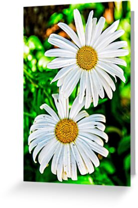 daisy, daisy by Lenore Locken