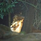 The King in Sidney Zoo by Bente Agerup