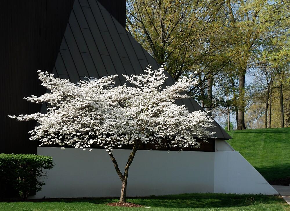 Flowering beauty by Jim Caldwell