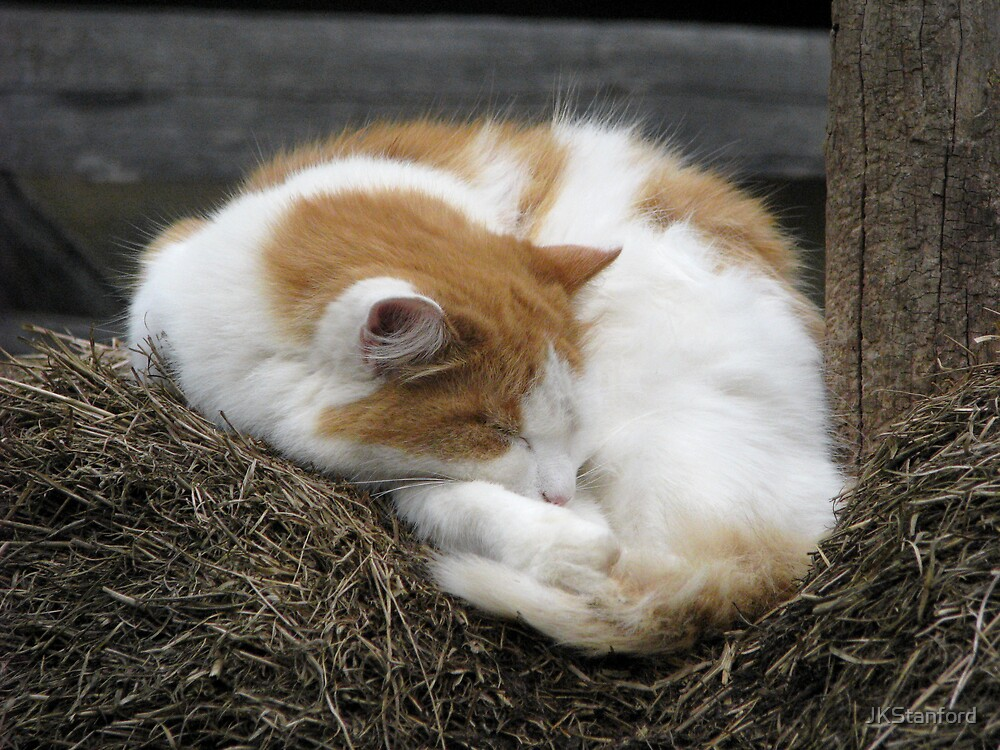 Farm Cat by JKStanford