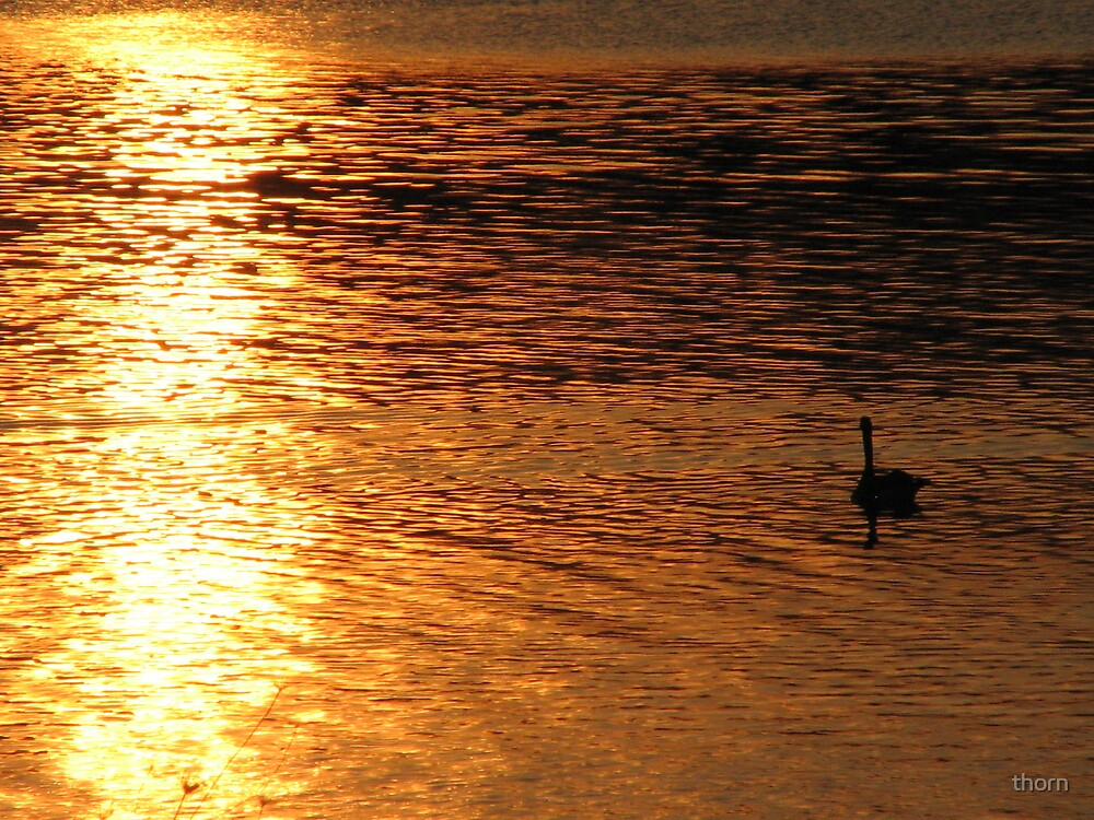 Sunset on a lake by thorn