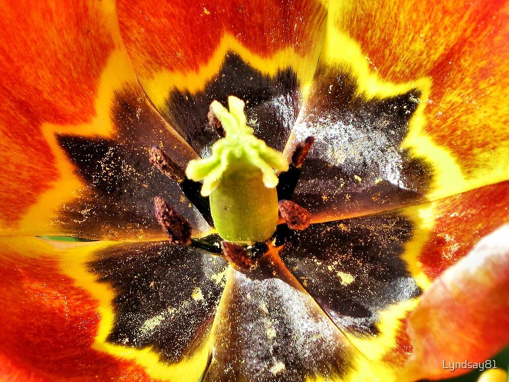 Inside A Flower by Lyndsay81