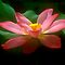 Avatar Challenge - Enchanted Flower