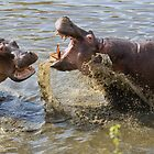 Male Hippos Fighting by Yair Karelic