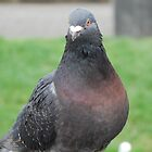 Mr City Pigeon by lizdomett